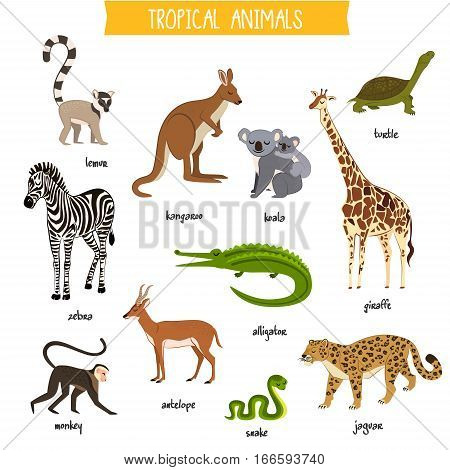 Tropical animals isolated