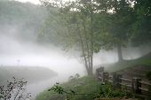 Nature In The Fog