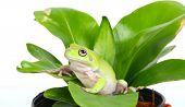 a green frog in a potplant