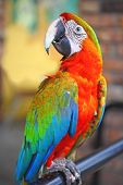 Bright Parrot Close-Up