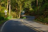 pic of twisty  - a twisty road winding through the woods - JPG