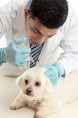 Vet Inserting A Needle Syringe Into Pet
