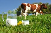 image of dairy cattle  - Jug of milk against herd of cows - JPG