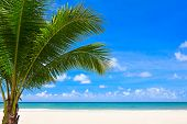Palm tree on beach background