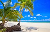 Couple palm tree on the summer beach near sea water. White sand, tropical nature, blue sky