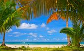 stock photo of summer beach  - Palm tree frame around summer beach - JPG