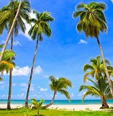 Palm trees near beautiful sea on white sand beach, blue sky and clouds