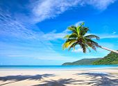 Tropical nature view with palm tree on the beach under beautiful sky