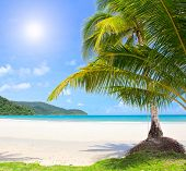 Sunny beach and palm tree