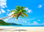 foto of summer beach  - Fantastic palm tree over tropical beach in luxury resort - JPG
