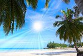 Tropical trees on white sand beach under the sun