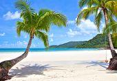 Palm trees on empty sunny beach