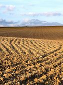 Clod of the furrows of a ploughed field ready to sow