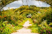 Landscape View On The Beautiful Claud Monets Garden, Famous French Impressionist Painter In Giverny  poster
