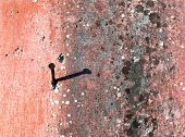 alten Putz der Wand verschimmelt