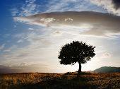 solitary oak tree at twilight