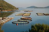 fisheries in the sea of Igoumenitsa, Greece
