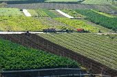 patchwork landscape where vegetables are grown