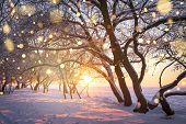 Christmas Background With Colorful Glowing Snowflakes. Winter Nature. Magic Xmas Lights. Snowy Trees poster