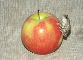 Tree frog on an apple