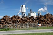 stock photo of polution  - logs stored outside a pulp and paper mill - JPG