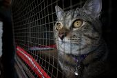 Cat In Cage - Cruelty To Animals poster