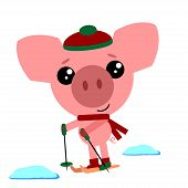 Pig In Cozzy Hat And Scarf Skiing. Cute Pig Symbol Of New Year 2019. Winter Activities Sport. Christ poster