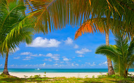 foto of summer beach  - Palm tree frame around summer beach - JPG