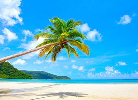 image of summer beach  - Fantastic palm tree over tropical beach in luxury resort - JPG