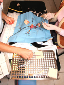 picture of castration  - surgical castration of cat - JPG
