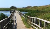 Wooden Bridge in the Cavendish Dunelands, Prince Edward Island National Park poster