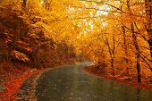 Autumn landscape with road and beautiful colored trees