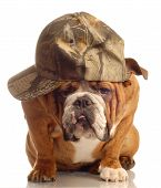 Bulldog Wearing Hunting Cap