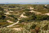 The dunes and North-Sea [Netherlands]