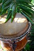 Conga Drum