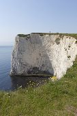 Studland Chalk Cliff