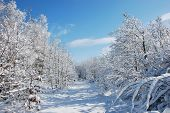 Snowy Path In A Winter Landscape