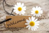 pic of initials  - a natural looking banner with welcome and white blossoms as background - JPG