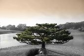 Árbol de Zen