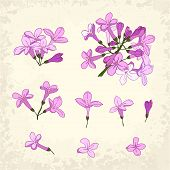 Lilac Details Set
