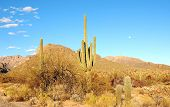 Desert Landscape With Cactus & Moon