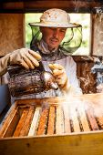 stock photo of smoker  - Beekeeper working in his apiary with smoker - JPG