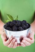 Juicy Blackberries In Woman Hands