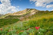 Colorado Alpine Meadow