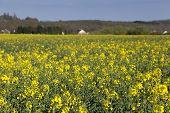 Country In Courson, Essonne, Ile De France, France