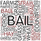 Word cloud - bail