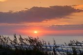 stock photo of sea oats  - a colorful sunrise over the Atlantic ocean in North Carolina - JPG