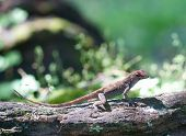 picture of fanny  - Green Lizard sitting on a piece of wood - JPG