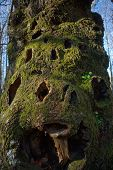 Holey Stump Trunk