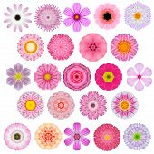 picture of kaleidoscope  - Huge Selection of Various Colorful Kaleidoscopic Mandala Flowers Isolated on White - JPG